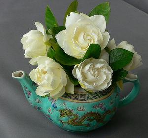 تربية زهور ـآإلجاردينا